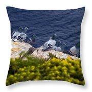 Racing Pigeons Throw Pillow