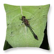 Racket-tailed Emerald Dragonfly Throw Pillow
