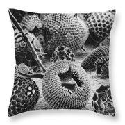 Radiolarians Sem Throw Pillow