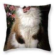 Ragdoll Cat Licks His Lips Throw Pillow