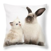 Ragdoll-cross Kitten And Young Throw Pillow