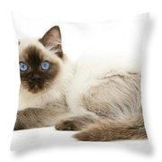 Ragdoll Kitten Throw Pillow