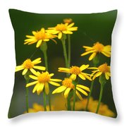 Ragwort Throw Pillow