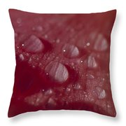 Rain Droplets Magnify The Surface Throw Pillow