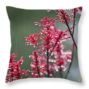 Rain Drops On Firespike  Throw Pillow