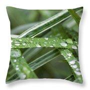 Rain Drops On Grasses Throw Pillow