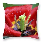 Rain Kissed Tulip 2 Throw Pillow