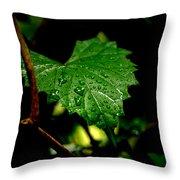 Rain On Ivy Throw Pillow