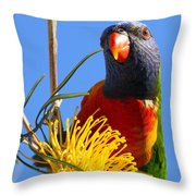 Rainbow Lorikeet Pose Throw Pillow