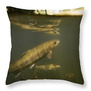 Rainbow Trout In Creek  Aptos California Throw Pillow