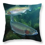 Rainbow Trout Oncorhynchus Mykiss Pair Throw Pillow
