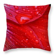 Raindrops On Amaryllis Throw Pillow