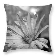 Raindrops On Daisy Throw Pillow