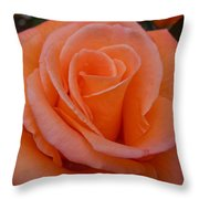 Raindrops On Roses Seven Throw Pillow