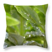Raindrops On Sedum Throw Pillow