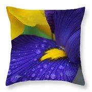 Raindrops Purple Dutch Iris Flower Throw Pillow