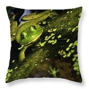 Rana Clamitans Or Green Frog Throw Pillow