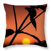 Raphael Sunset 1 Throw Pillow