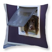 Razzle Who Goes There Throw Pillow