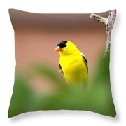 Really Shy Throw Pillow