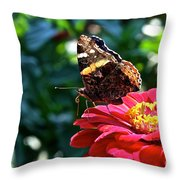 Red Admiral Probocis Throw Pillow