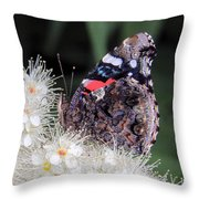 Red Admiral With Folded Wings Throw Pillow