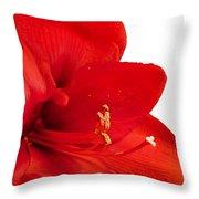 Red Amaryllis  Throw Pillow