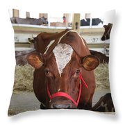 Red And White Cow In A Stable Close Up Throw Pillow