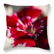 Red And White Dianthus Throw Pillow