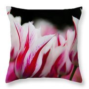 Red And White Tulips In Holland Throw Pillow