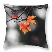 Red And Yellow Fall Leave's Closeup Throw Pillow
