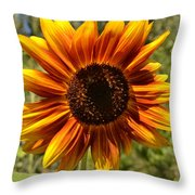 Red And Yellow Sunflower Throw Pillow