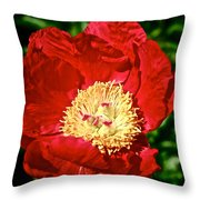 Red And Yellow Throw Pillow