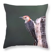 Red-bellied Woodpecker - Looking For Food Throw Pillow