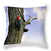 Red-bellied Woodpecker - Male Throw Pillow