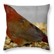 Red Billed Fire Finch Throw Pillow