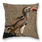 Red-billed Hornbill Throw Pillow