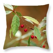 Red Bird Berries Of Fall Throw Pillow