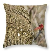 Red-breasted Sapsucker 3 Throw Pillow