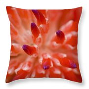 Red Bromeliad Throw Pillow by Rich Franco