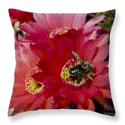 Red Cactus Flower With Bumble Bee Throw Pillow