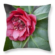 Red Camellia Squared Throw Pillow
