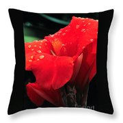 Red Canna With Raindrops Throw Pillow
