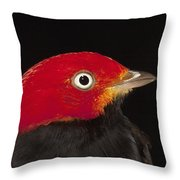 Red-capped Manakin Pipra Mentalis Male Throw Pillow