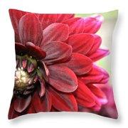 Red Carpet Dahlia Throw Pillow