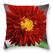 Red Dahlia Unfurled Throw Pillow