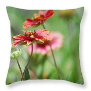 Red Daisies  Throw Pillow