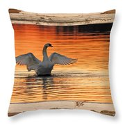 Red Dawn Swan Framed In Old Window Frame Throw Pillow