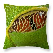 Red Eyed Tree Frog Eyelid Costa Rica Throw Pillow