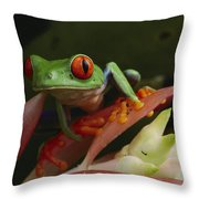 Red-eyed Tree Frog In Costa Rica Throw Pillow